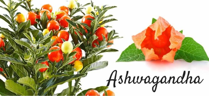 Výsledek obrázku pro ashwagandha